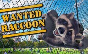 Wanted Raccoon Télécharger Jeu